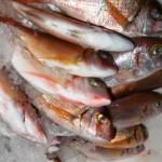 Fresh fish in Latchi