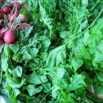 Rocket and radishes