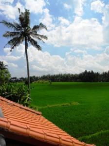 View from Ibu Oka's terrace