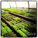 Le Manoir - herb garden