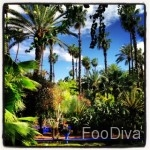 YSL's Majorelle gardens - Marrakech