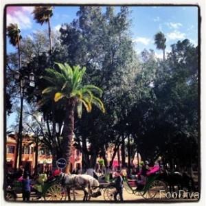 Horse and cart? - Marrakech