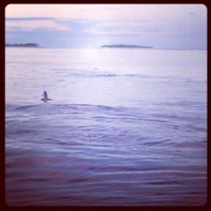 Spot the dolphin