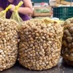 Snails at Lisbon food market