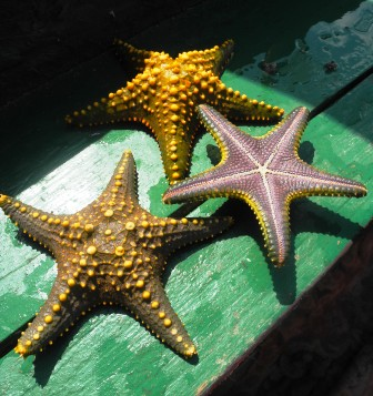 Starfish just off Prison island coast